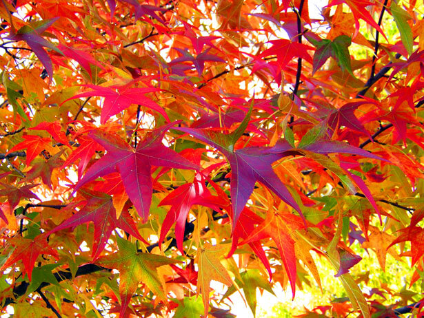 October_Autumn_Leaves