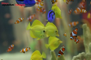 Urban_Vacation_Ripley's_Aquarium_of_Canada